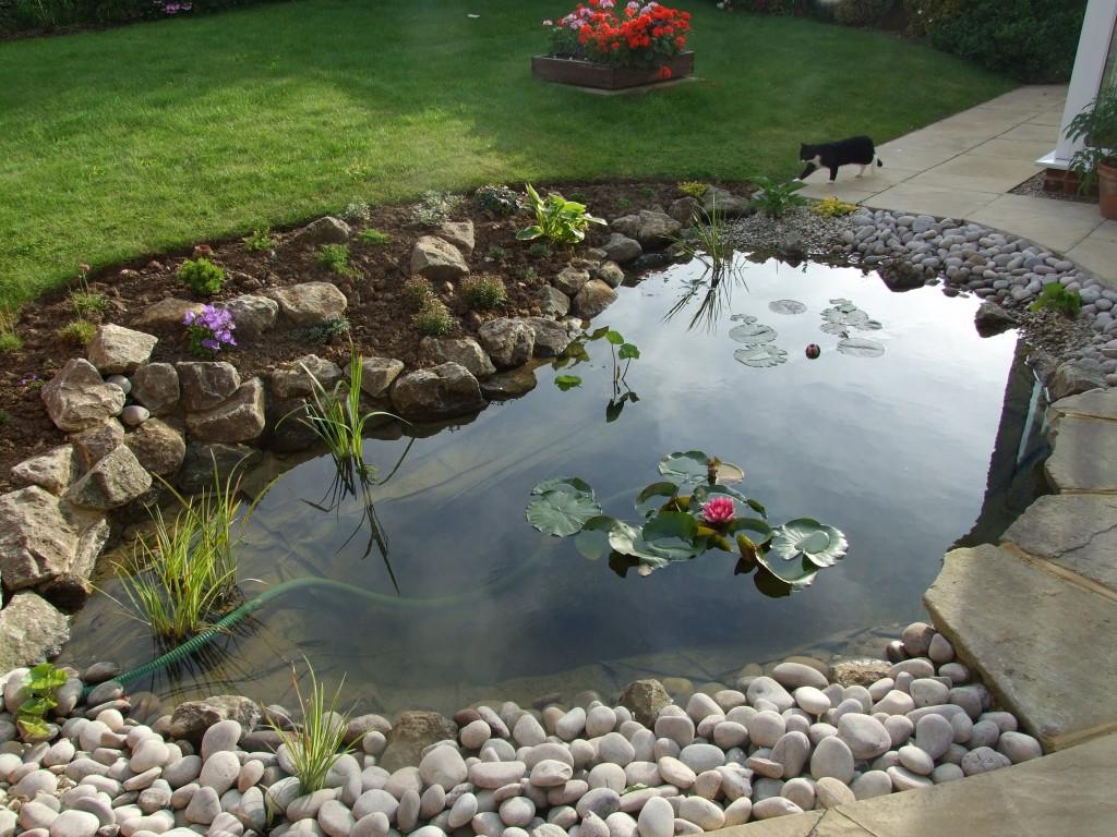 pond-1